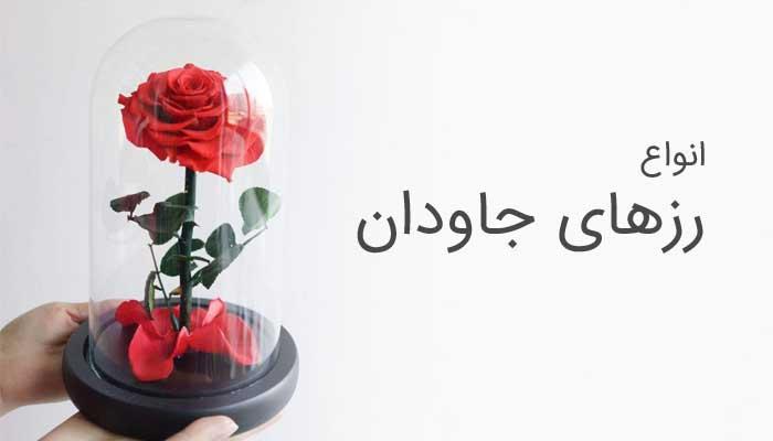 گل رز جاودان - صفحه اصلی